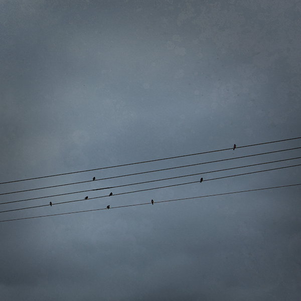 Birds On Powerlines Photo Art by Paul Theseira