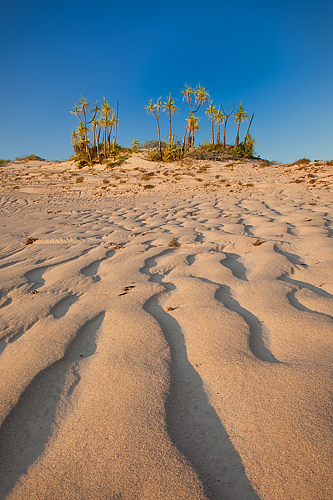 Cape Leveque Pandanus by Paul Theseira